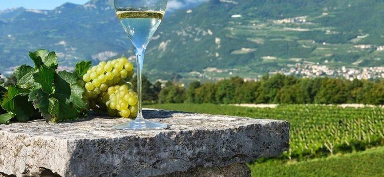 L'enoturismo protagonista in Vallagarina, il progetto dell'Apt con 20 aziende vitivinicole per rilanciare il territorio. Prosser: ''Facciamo rete per ripartire''