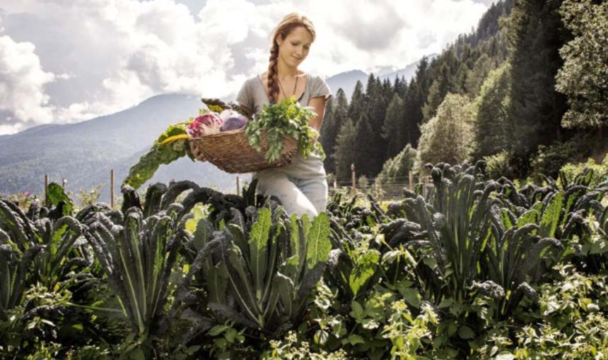 Riflessioni su alcune pratiche alimentari del Trentino. Agricoltura, cibo e paesaggio