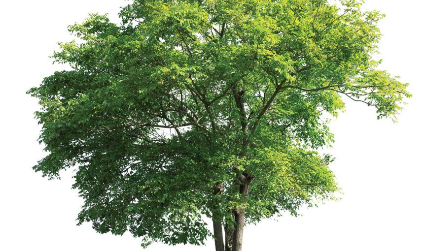 L'applicazione dei criteri ambientali minimi alla gestione del verde pubblico in Italia e in Trentino - Webinar gratuito8