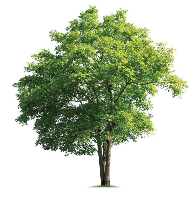 L'applicazione dei criteri ambientali minimi alla gestione del verde pubblico in Italia e in Trentino - Webinar gratuito7