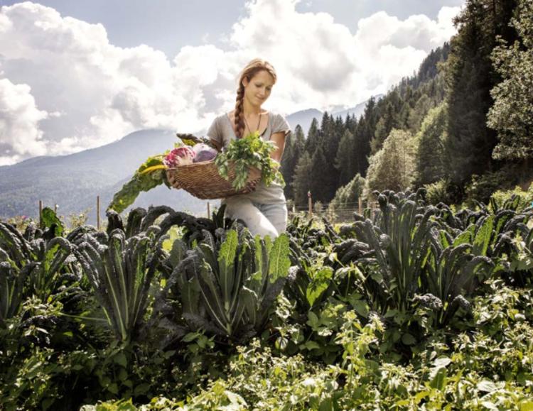 Orticoltura in Val di Sole. Fototeca Trentino Sviluppo S.p.A.7